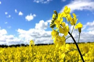 بیش از 200 پروژه کشاورزی در سقز به بهرهبرداری میرسد
