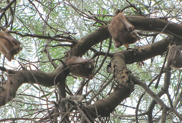 خفاشها لانه ندارند/ واکنش محیط زیست کردستان درباره حضور مردم در غارها برای جمع آوری لانه خفاشان